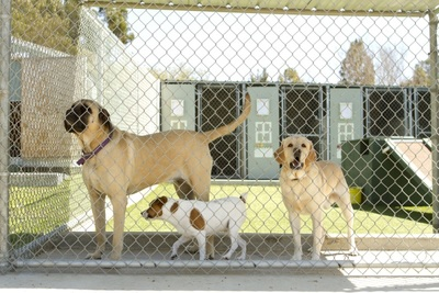 Dog Boarding Kennel Melbourne