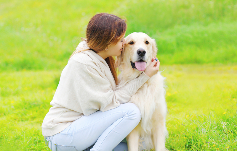 Doggy Day Care  - Ways to Start Your Own Doggy Day Care Center