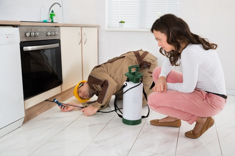 Home Pest Control  - Home Pest Control: Keeping Your Home Clean To Get Rid Of Pests